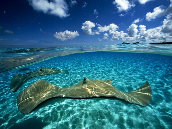 pair-of-stingrays_1480_600x450